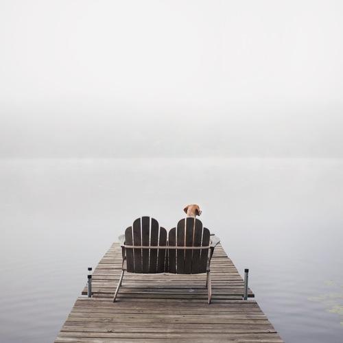 fog11